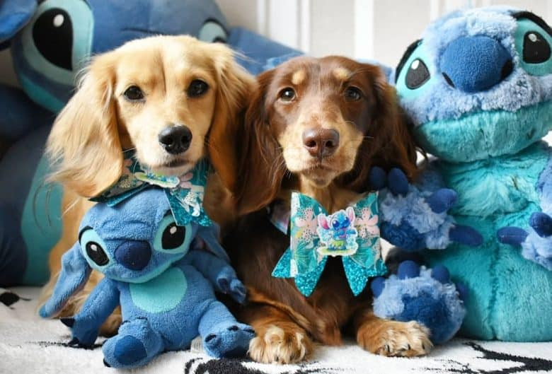 Two Doxies with stitch stuff toys