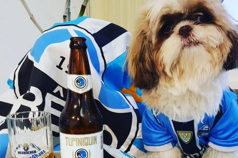 a Shih Tzu wearing a jersey with a bottle and mug of beer
