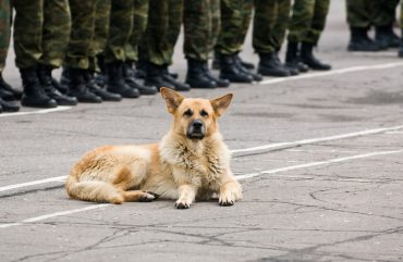 a military dog laying on a concrete floor with soldiers behind