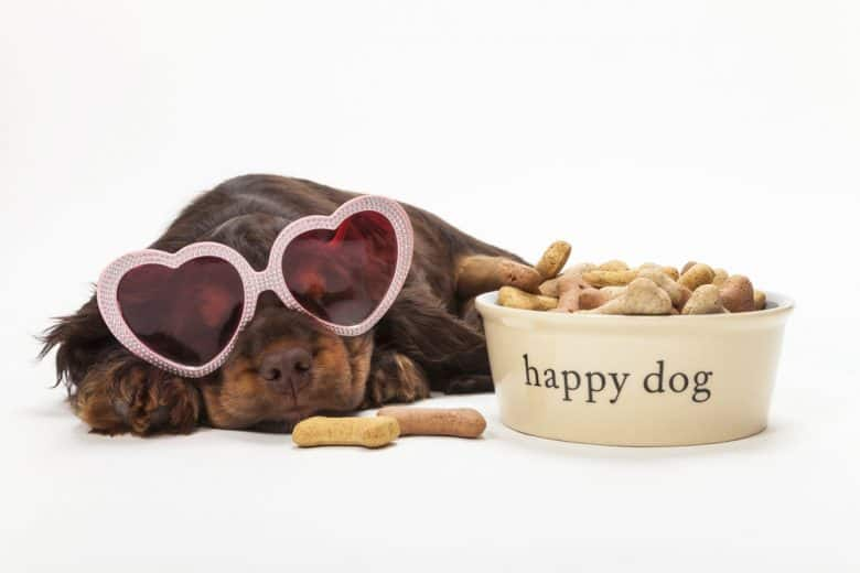 a Cocker Spaniel laying down while wearing a pink heart sunglasses