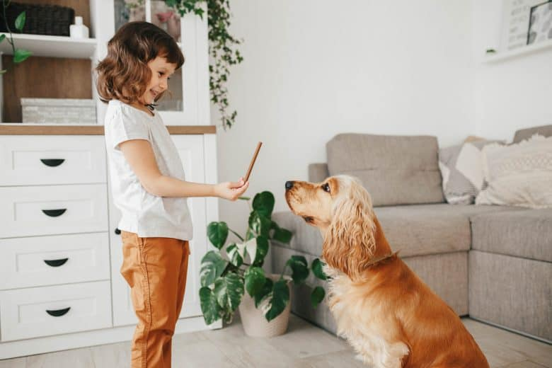 a little girl teaching a Cocker Spaniel how to behave
