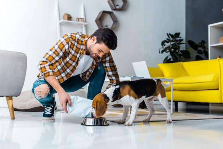 a happy man feeding a hungry Beagle