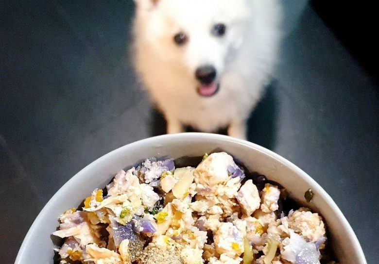 a white Spitz waiting for his home cooked dog food