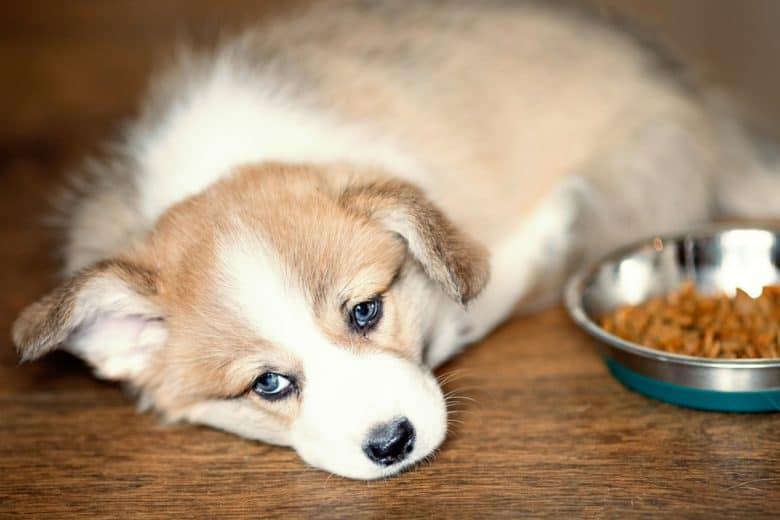 a puppy laying on the floor with half eaten dog food