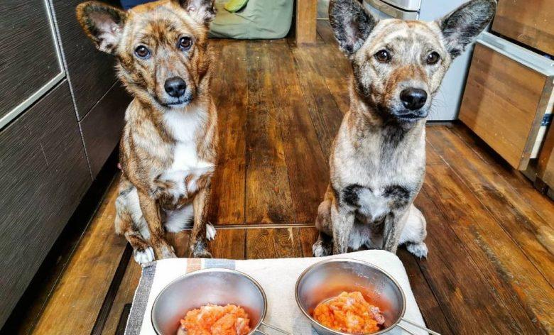 Two Ryukyu waiting for raw fish
