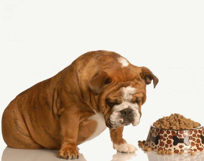 an overweight Bulldog with a dog bowl filled to the brim