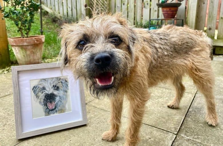 a Border Terrier happily smiling with a painting