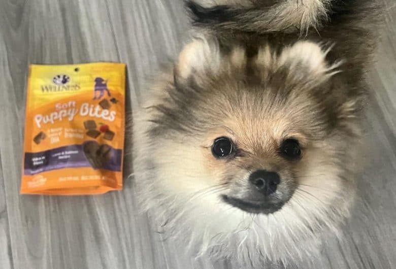 a Pomeranian looking up standing near a packet of treats