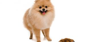 a Pomeranian with a filled dog bowl