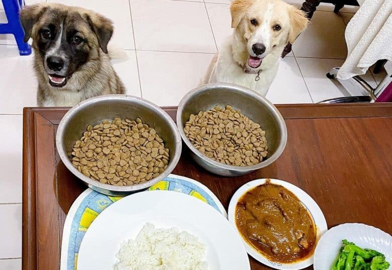 two dogs waiting for their meal