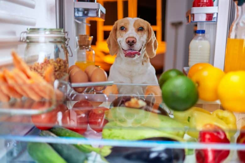 Dog checking food from the refrigerator