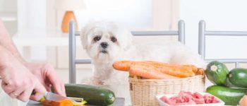 Pet owner preparing natural food for her dog