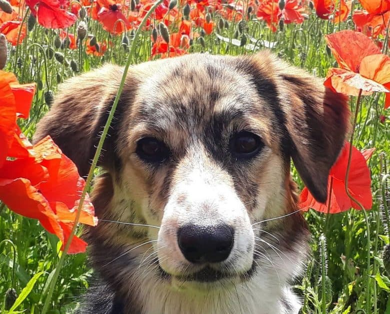 Portrait of dog in the middle of the flower garden