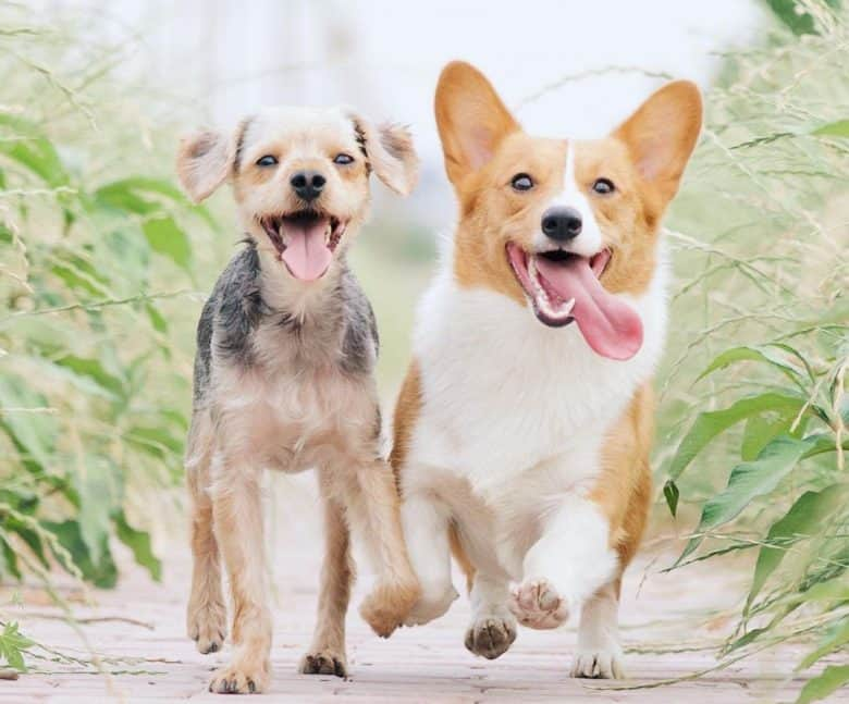 Two lovely dogs playing outdoor