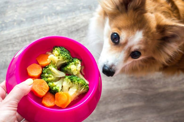 Dog having a carrots and broccoli meal