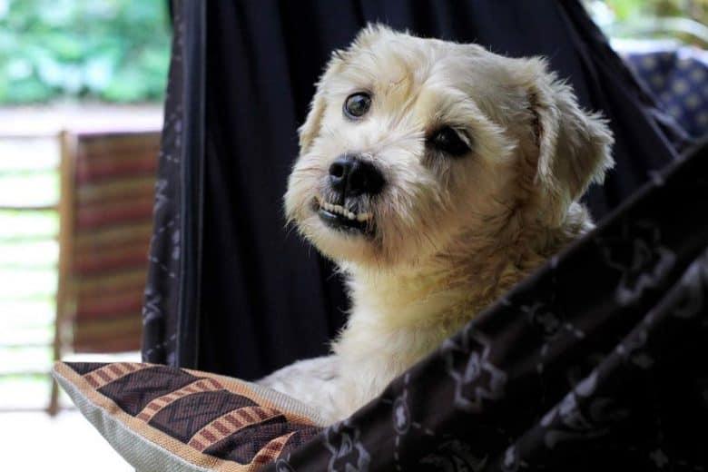 An ill dog lying on hammock
